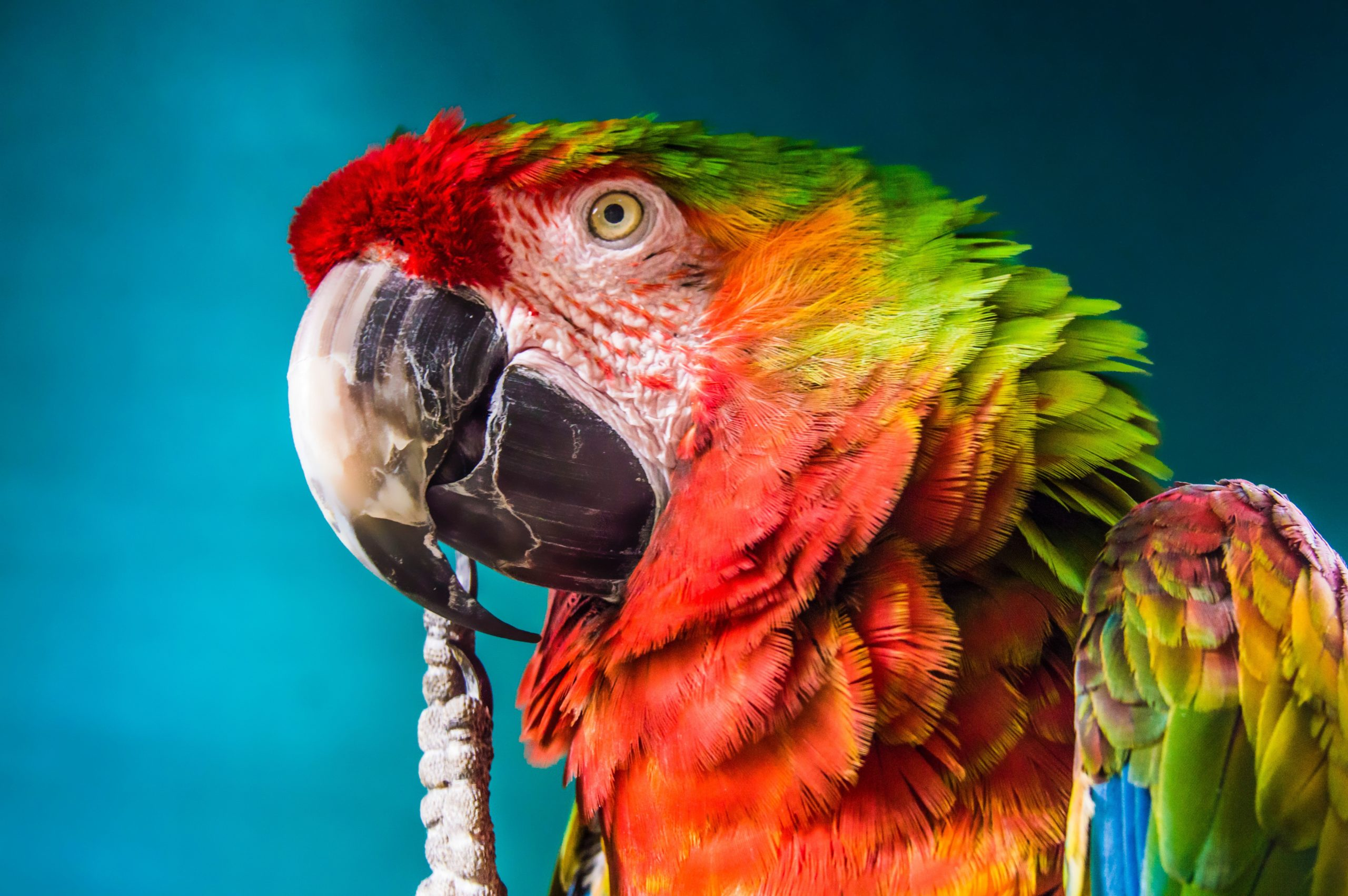 CRI-Parrot